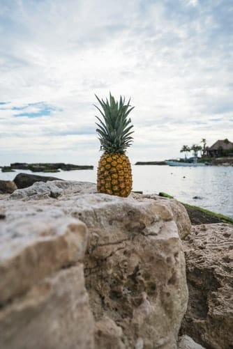a soon to be fermented pineapple on a rock at the beach preparing himself to be made into tepache